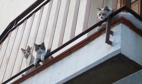 gatti balcone condominio petlocal.eu