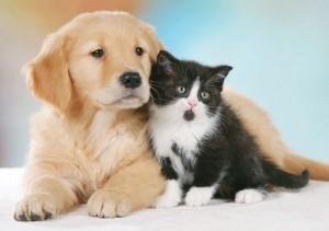 cane gatto cuccioli il fumo fa male ai cani e ai gatti - PetLocal.eu