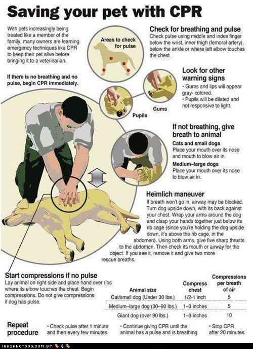 Salva il tuo animale con le manovre di rianimazione- petlocal.eu