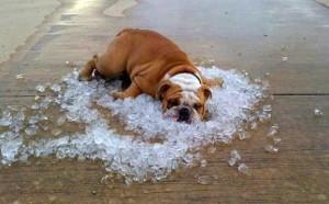 colpo di calore cane gatto animali domestici petlocal trip advisor per animali domestici